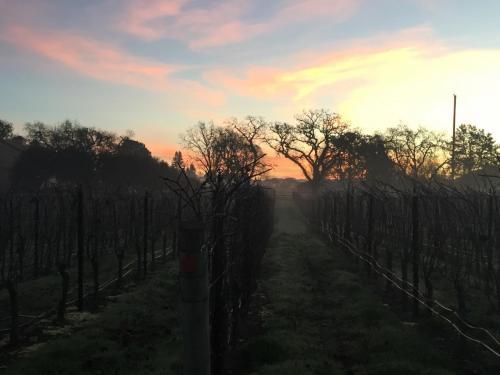 sunrise of harverst 2019