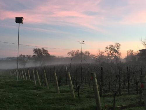 Good morning sunshine!  Russian River Valley beauty!